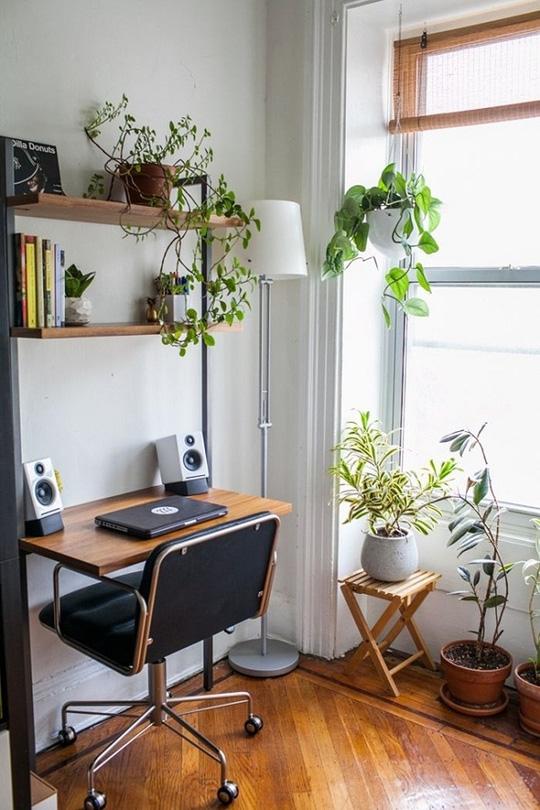 phòng làm việc nhiều cây xanh