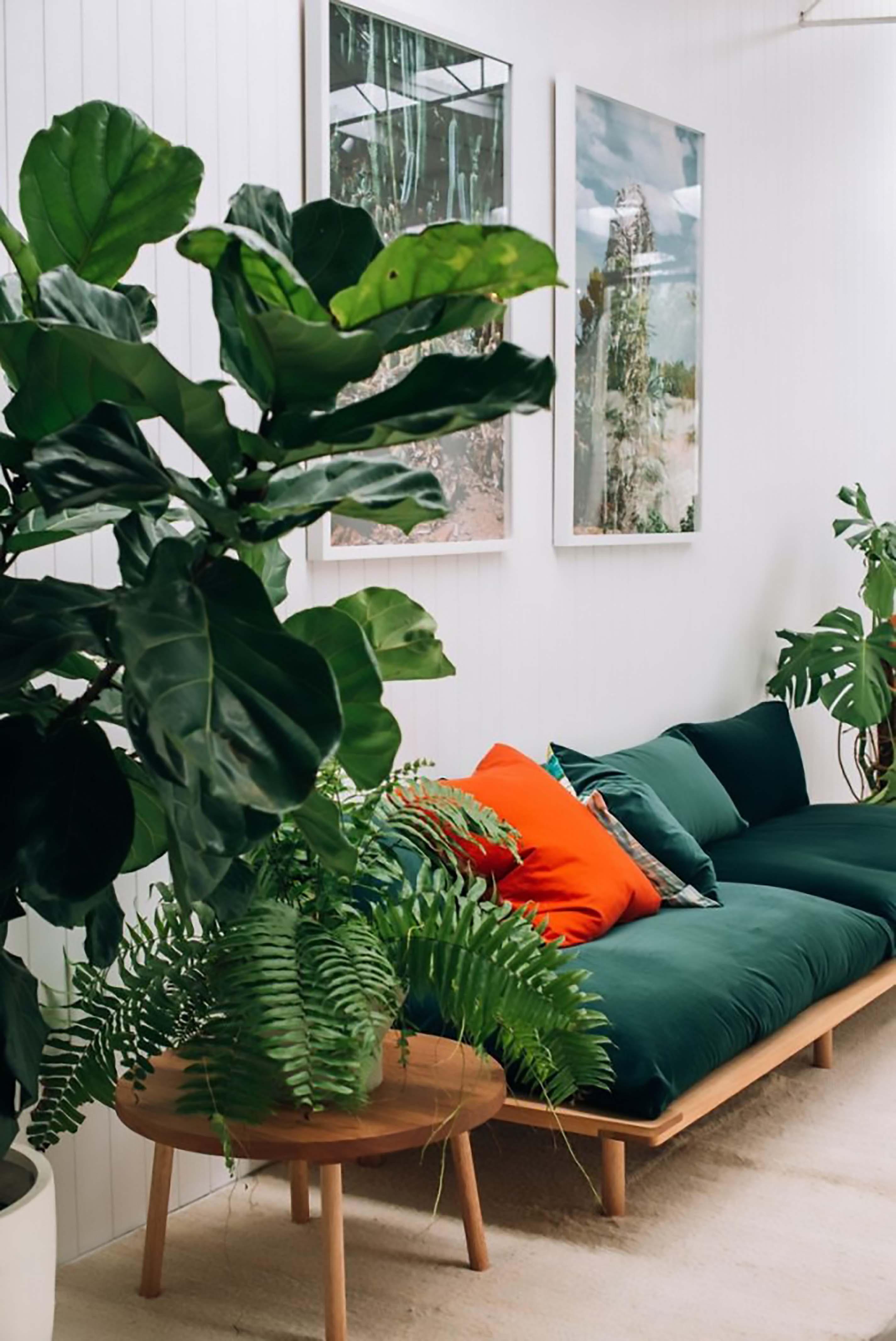cây xanh phòng khách 7