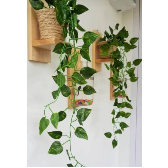 Kệ gỗ treo tường để cây cảnh 3