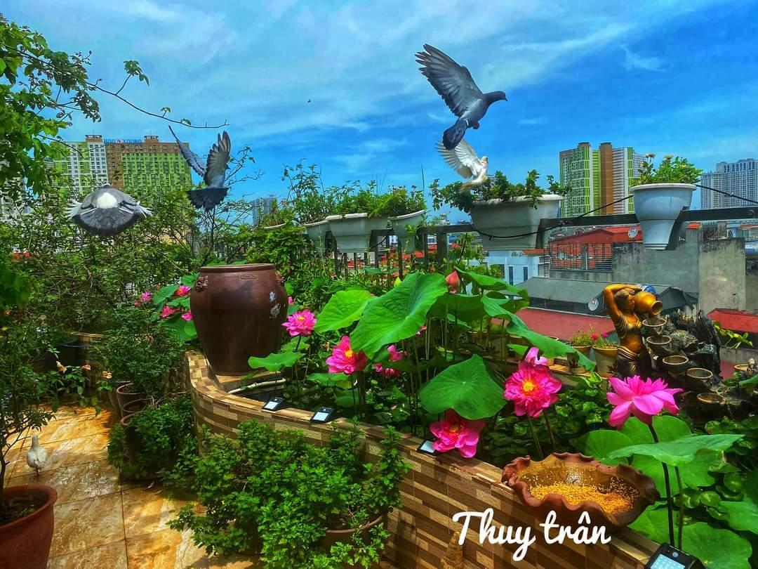sân thượng đẹp mắt với vườn hoa