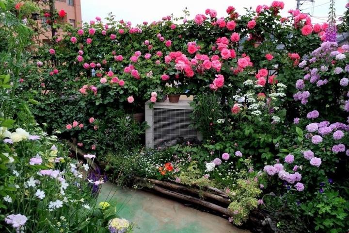 thiết kế sân thượng đẹp mắt với vườn hoa